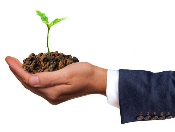Plant and soil in business man's hand