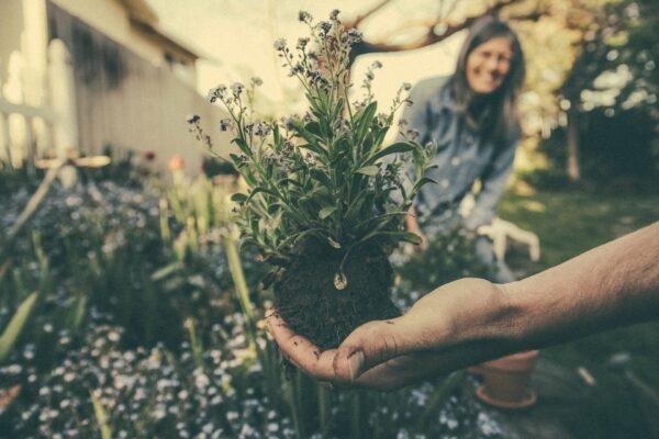 gardening help
